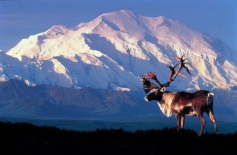 Denali - North America's highest peak appears to the human eye to be even larger than the much taller Mt. Everest. Because of its mass and 18,000-foot linear rise from the valley below Denali ranks among Earth's largest topographical features